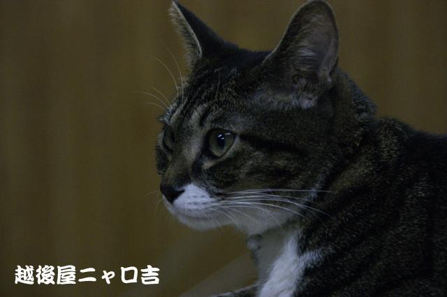 CAT THEATER(ネコ劇場)_e0196927_145369.jpg