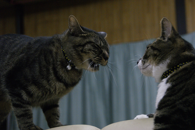 CAT THEATER(ネコ劇場)_e0196927_1472583.jpg