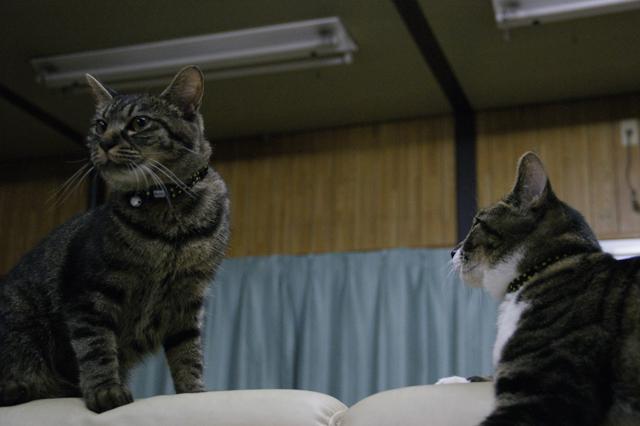 CAT THEATER(ネコ劇場)_e0196927_1485492.jpg