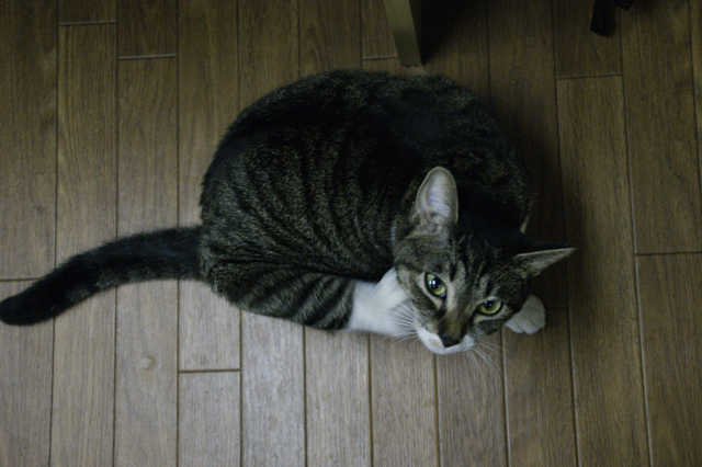 CAT THEATER(ネコ劇場)_e0196927_149332.jpg