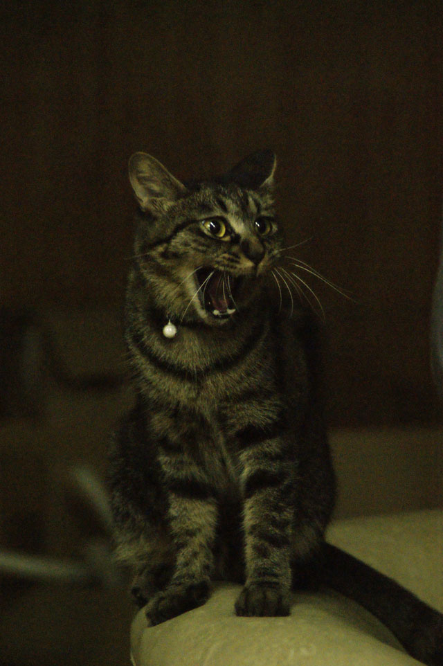 CAT THEATER(ネコ劇場)_e0196927_1525461.jpg