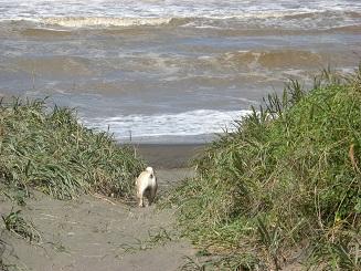 シャンプー前に海へ行く_a0159640_16372019.jpg