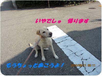 b0198549_20444852.jpg