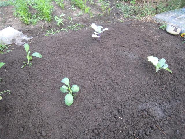 雨が降ってようやく種蒔きを。_e0121558_20355794.jpg