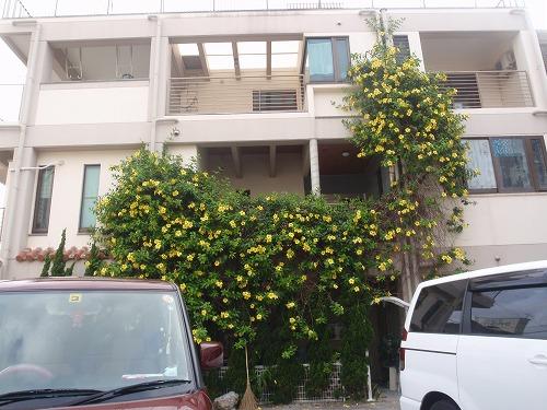夏の花々⑦_c0180460_6105288.jpg