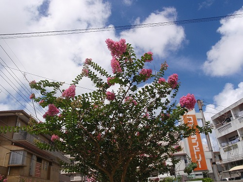 夏の花々⑦_c0180460_610630.jpg