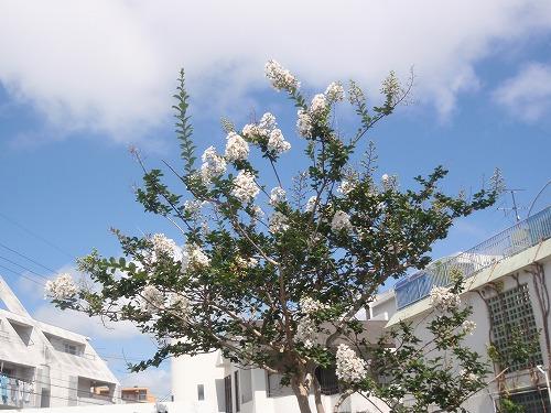 夏の花々⑦_c0180460_632225.jpg