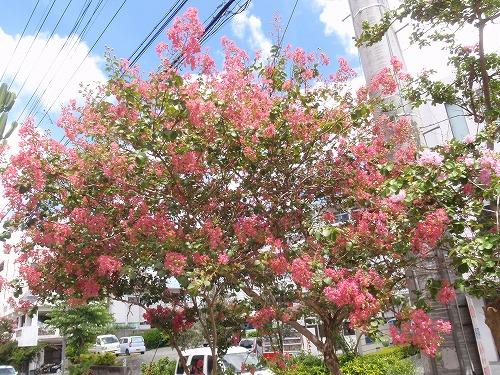 夏の花々⑦_c0180460_653564.jpg