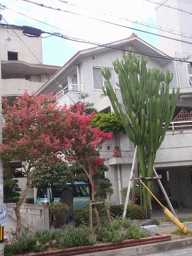 夏の花々⑦_c0180460_672356.jpg