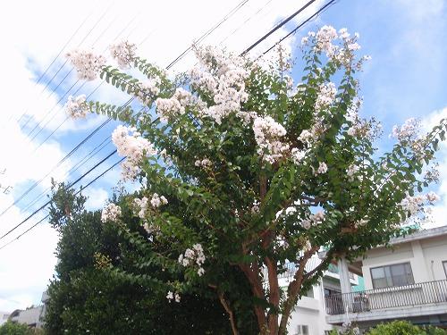 夏の花々⑦_c0180460_675778.jpg