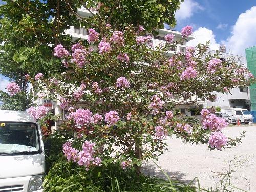 夏の花々⑦_c0180460_685270.jpg