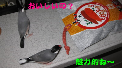 b0158061_20102748.jpg