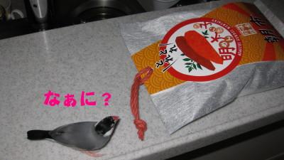 b0158061_2010975.jpg