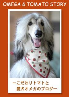 【 お知らせ 】_c0126766_2012231.jpg