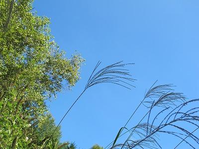 今日も澄んだ空です_a0129867_1384011.jpg