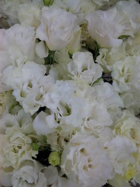 花の表情_d0099708_11325112.jpg