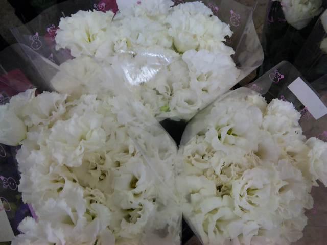 花の表情_d0099708_11325146.jpg