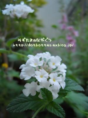 d0170109_1711843.jpg