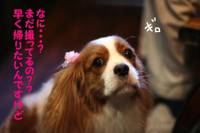 遂に!!newレンズ登場!!_b0130018_182826100.jpg