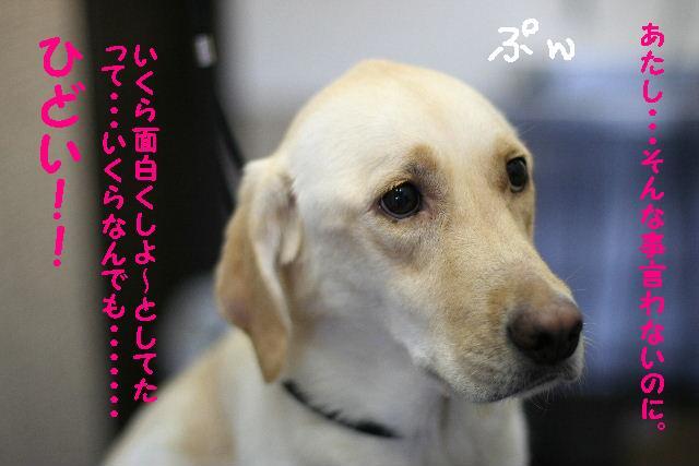 遂に!!newレンズ登場!!_b0130018_183020100.jpg