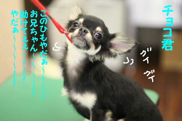 遂に!!newレンズ登場!!_b0130018_1833569.jpg