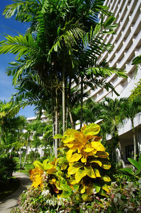 2010年夏のグアム旅行(5) ~ Resort Hotel ① HOTEL NIKKO GUAM~_c0223825_1934564.jpg