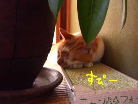 チビタと一緒に_a0099131_13585431.jpg