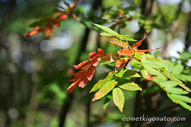 白駒池の秋は近い?_b0179231_10565670.jpg
