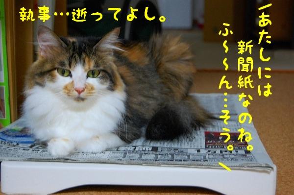 c0181639_1554751.jpg