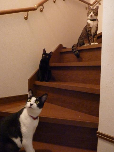 猫のお友だち じょあんちゃん はんくすちゃん くましーちゃん編。_a0143140_18384062.jpg