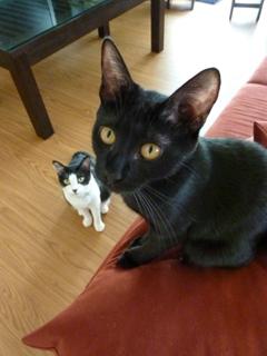 猫のお友だち じょあんちゃん はんくすちゃん くましーちゃん編。_a0143140_18441211.jpg