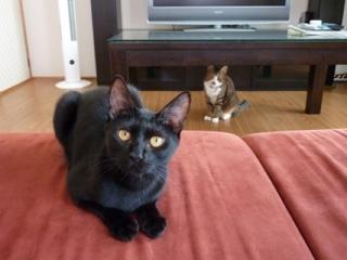 猫のお友だち じょあんちゃん はんくすちゃん くましーちゃん編。_a0143140_18492620.jpg