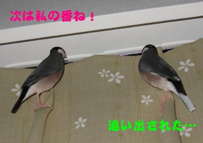 b0158061_19424071.jpg