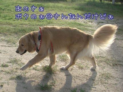 c0107886_2011558.jpg