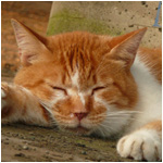 猫が眠りに落ちる瞬間 猫の靴下