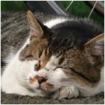 猫の手のひら枕 猫の靴下