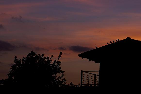 夕空に、漸く秋の気配 #3_f0155808_6571550.jpg