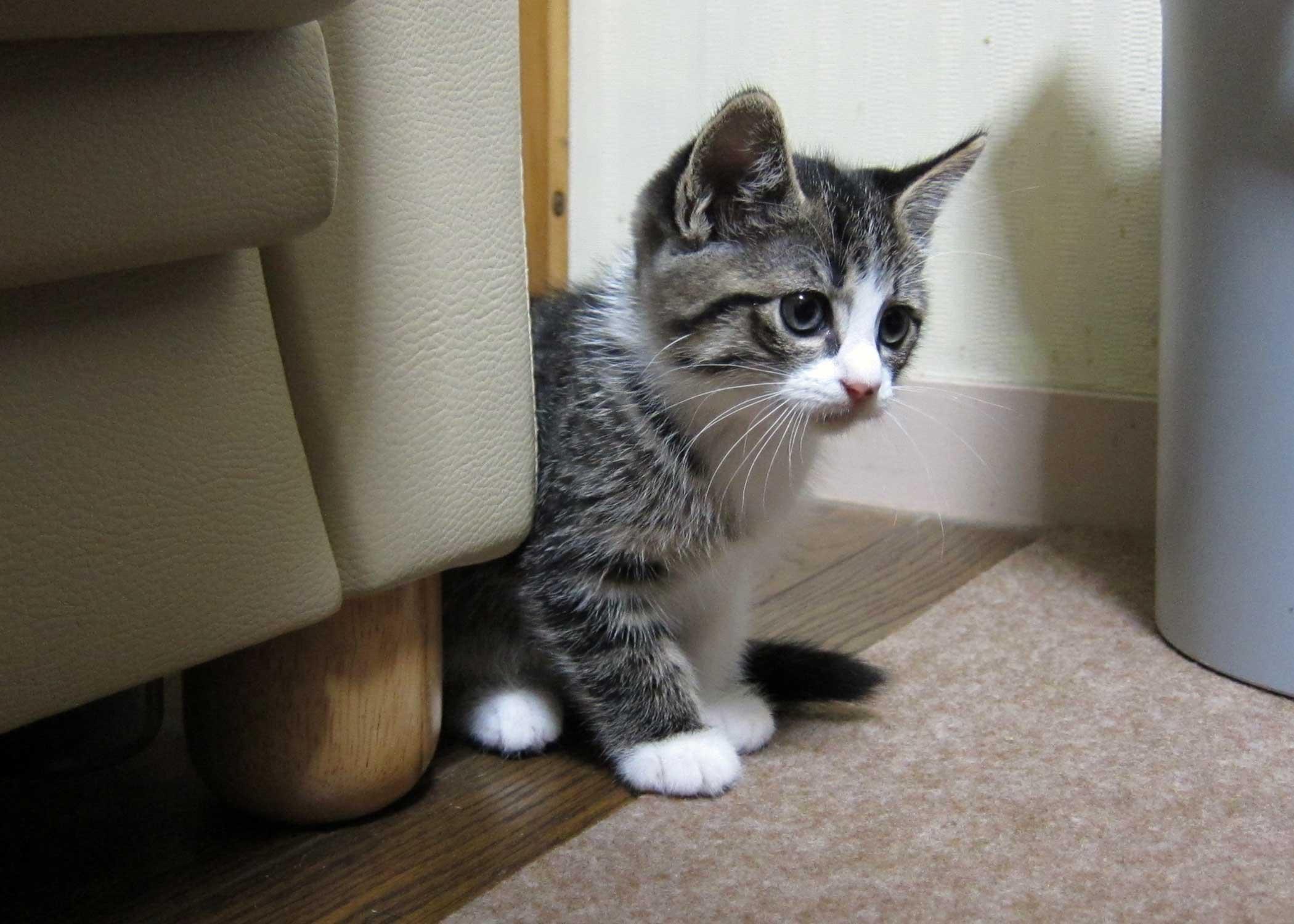 猫がきた!_f0141609_2331163.jpg