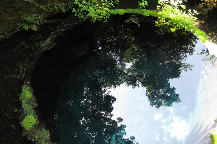 静岡県清水町  柿田川湧水群でS95をテスト_b0061717_23523542.jpg
