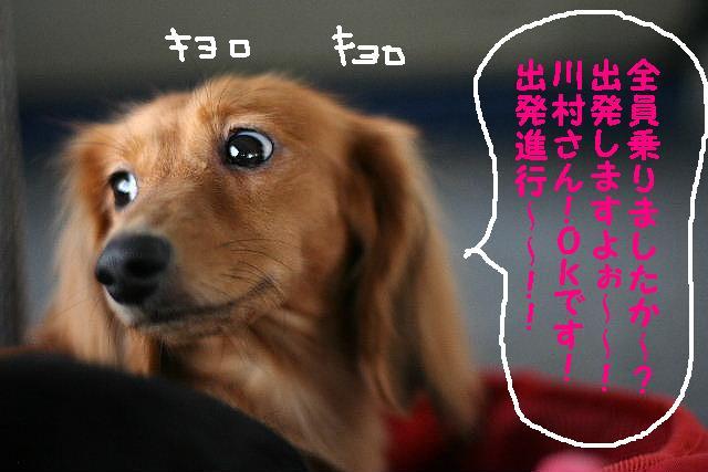 ダックスちゃんまみれ!_b0130018_1538486.jpg
