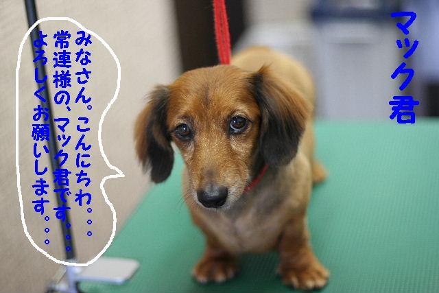 ダックスちゃんまみれ!_b0130018_1543249.jpg