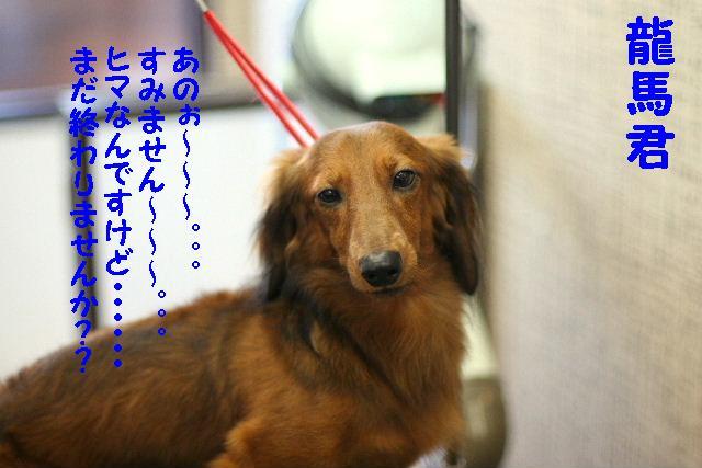 ダックスちゃんまみれ!_b0130018_15452079.jpg
