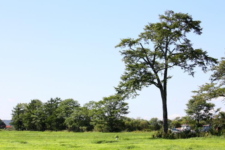 牧草ロールとたんちょう 9月13日_f0113639_16291447.jpg