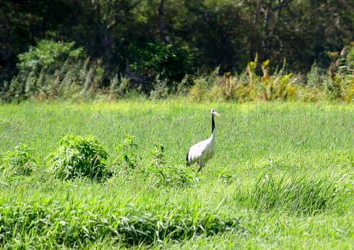 牧草ロールとたんちょう 9月13日_f0113639_163118100.jpg