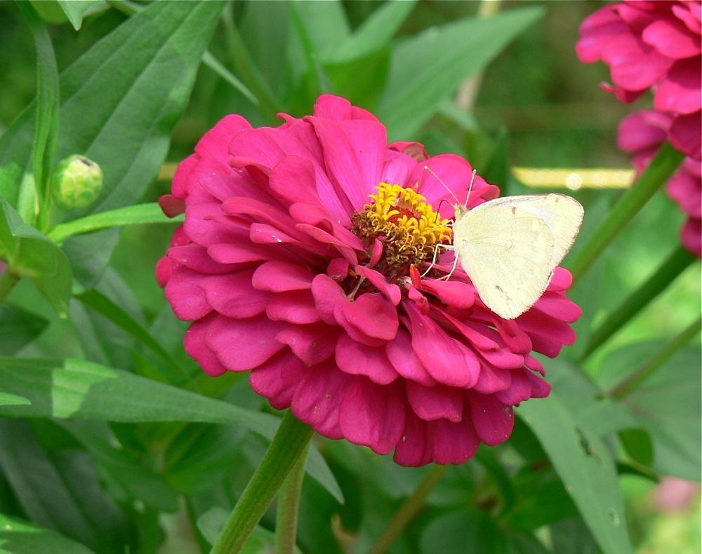 黒い蝶を追って_d0001843_024367.jpg