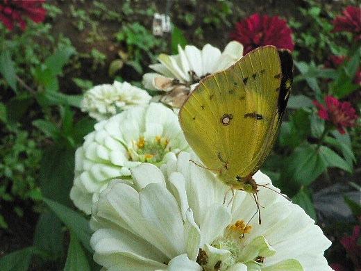黒い蝶を追って_d0001843_0252038.jpg