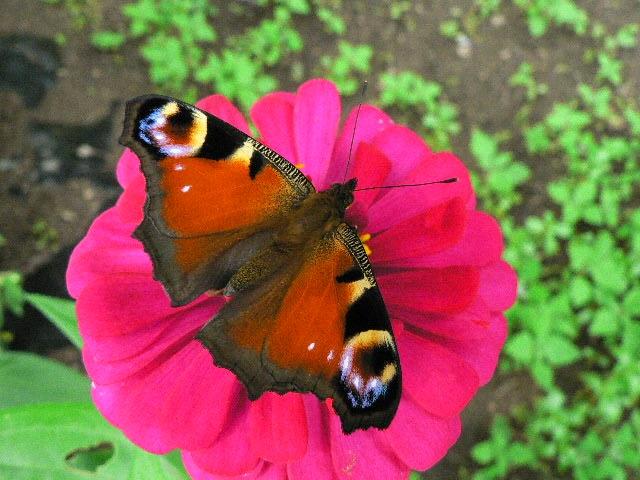 黒い蝶を追って_d0001843_0265849.jpg