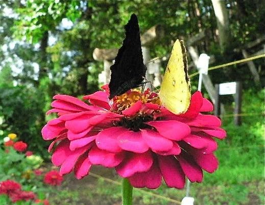 黒い蝶を追って_d0001843_0273245.jpg