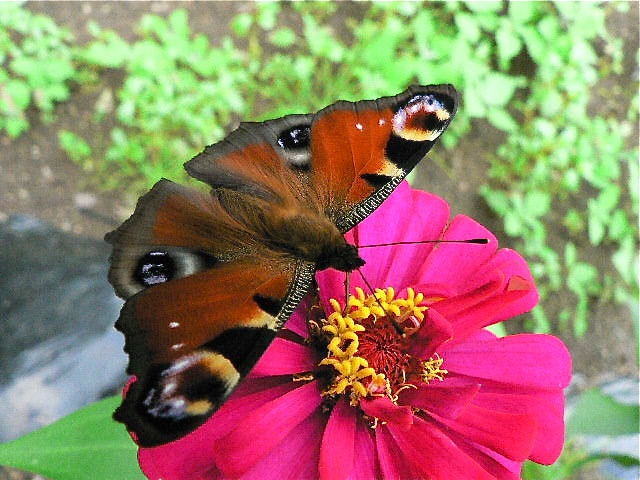 黒い蝶を追って_d0001843_0283714.jpg