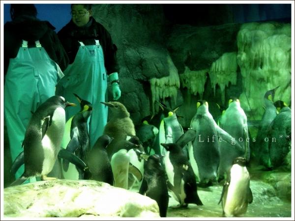 海遊館 ペンギンちゃん *_b0155684_20582941.jpg